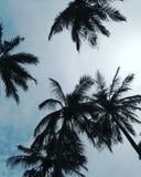 Φοίνικες και μπλε ουρανός Στοκ Εικόνα