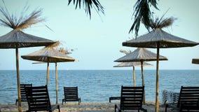 Φοίνικες και μόνιππο -μόνιππο-longue στην παραλία απόθεμα βίντεο