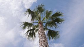 Φοίνικες Καλιφόρνιας στην οδό Ταξίδι, καλοκαίρι, διακοπές και τροπική έννοια παραλιών απόθεμα βίντεο