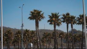Φοίνικες Καλιφόρνιας στην οδό Ταξίδι, καλοκαίρι, διακοπές και τροπική έννοια παραλιών φιλμ μικρού μήκους