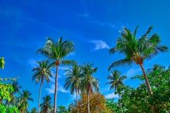 Φοίνικες καρύδων ενάντια σε έναν μπλε ουρανό με το άσπρο υπόβαθρο σύννεφων Κατώτατη όψη Ηλιόλουστη ημέρα έννοιας στη ζούγκλα, δια στοκ εικόνα με δικαίωμα ελεύθερης χρήσης