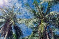 Φοίνικες καρύδων και μπλε ουρανός με τα ελαφριά σύννεφα Στοκ Εικόνες