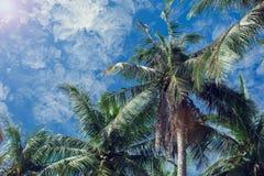 Φοίνικες καρύδων και μπλε ουρανός με τα ελαφριά σύννεφα Στοκ Εικόνα