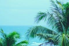 Φοίνικες καρύδων με την μπλε ήρεμη θάλασσα, καλοκαίρι στοκ εικόνα με δικαίωμα ελεύθερης χρήσης