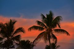 Φοίνικες καρύδων ουρανού ηλιοβασιλέματος στις Καραϊβικές Θάλασσες Στοκ Φωτογραφίες