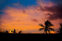 Φοίνικες καρύδων ουρανού ηλιοβασιλέματος στις Καραϊβικές Θάλασσες Στοκ φωτογραφίες με δικαίωμα ελεύθερης χρήσης