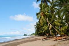 Φοίνικες καρύδων στην παραλία με το τοπίο μπλε ουρανού στοκ φωτογραφίες