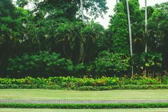 Φοίνικες καρύδων, όμορφες θερινή παραθαλάσσιες διακοπές στοκ εικόνες
