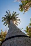 Φοίνικες καρύδων και ο λάμποντας ήλιος, κατώτατη άποψη, στο τροπικό νησί Phangan, Ταϊλάνδη Στοκ Φωτογραφία