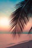 Φοίνικες καρύδων σκιαγραφιών στην παραλία στο ηλιοβασίλεμα στοκ φωτογραφία