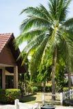 Φοίνικες καρύδων στο ταϊλανδικό χωριό Στοκ εικόνα με δικαίωμα ελεύθερης χρήσης