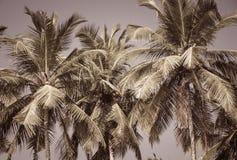 Φοίνικες καρύδων ως υπόβαθρο στοκ εικόνα με δικαίωμα ελεύθερης χρήσης
