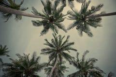 Φοίνικες καρύδων Στοκ Φωτογραφία