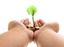Φοίνικες με μια ανάπτυξη δέντρων από το σωρό των νομισμάτων Στοκ Φωτογραφίες