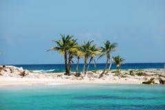φοίνικες νησιών καρύδων Στοκ εικόνα με δικαίωμα ελεύθερης χρήσης