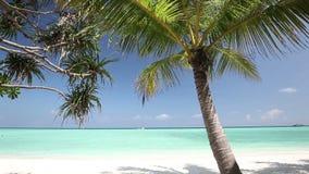 Φοίνικες πέρα από την τροπική λιμνοθάλασσα με την άσπρη παραλία φιλμ μικρού μήκους