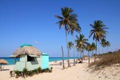 Φοίνικες παραλιών της Κούβας Στοκ φωτογραφίες με δικαίωμα ελεύθερης χρήσης