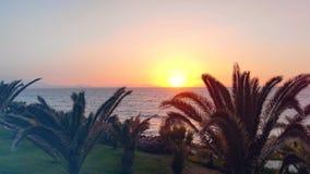 Φοίνικες που αυξάνονται κοντά σε μια παραλία σε ένα υπόβαθρο ηλιοβασιλέματος απόθεμα βίντεο