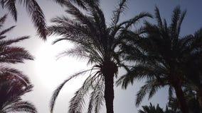 Φοίνικες που περνούν από έναν μπλε ουρανό Οδήγηση μέσω του ηλιόλουστου Μπέβερλι Χιλς Λος Άντζελες, Καλιφόρνια o φιλμ μικρού μήκους