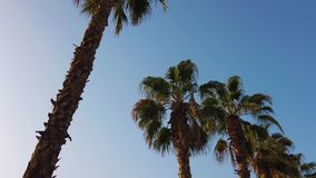Φοίνικες που περνούν από έναν μπλε ουρανό Οδήγηση μέσω του ηλιόλουστου Μπέβερλι Χιλς Λος Άντζελες, Καλιφόρνια o απόθεμα βίντεο