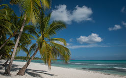 Φοίνικες σε μια καραϊβική παραλία Στοκ Εικόνες