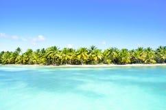 Φοίνικες σε μια παραλία στις Καραϊβικές Θάλασσες Στοκ Εικόνες