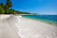 Φοίνικες σε μια τροπική παραλία Στοκ φωτογραφία με δικαίωμα ελεύθερης χρήσης