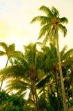 Φοίνικες σε Bora Bora στοκ φωτογραφία