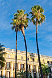 Φοίνικες σε Placa Reial, Βαρκελώνη Στοκ εικόνες με δικαίωμα ελεύθερης χρήσης