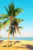 Φοίνικες στην ακτή του Ινδικού Ωκεανού Εμιράτο του Φούτζερα, Ε.Α.Ε. Φωτεινή τονισμένη φωτογραφία στοκ φωτογραφία με δικαίωμα ελεύθερης χρήσης