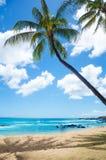 Φοίνικες στην αμμώδη παραλία στη Χαβάη Στοκ εικόνες με δικαίωμα ελεύθερης χρήσης