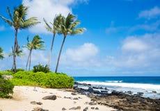 Φοίνικες στην αμμώδη παραλία στη Χαβάη Στοκ Εικόνα