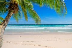Φοίνικες στην εξωτική τροπική παραλία στοκ εικόνες
