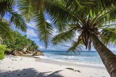 Φοίνικες στην παραλία παραδείσου στο anse patates, Λα digue, seychell Στοκ Εικόνα