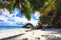 Φοίνικες στην παραλία παραδείσου στο anse patates, Λα digue, seychell Στοκ Εικόνες