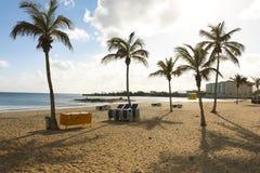 Φοίνικες στην παραλία, Arrecife, Lanzarote, Κανάρια νησιά Στοκ φωτογραφίες με δικαίωμα ελεύθερης χρήσης