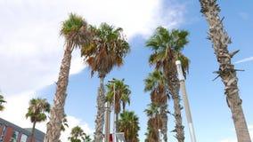 Φοίνικες στην παραλία Barceloneta, Βαρκελώνη απόθεμα βίντεο