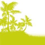 Φοίνικες στην παραλία Στοκ εικόνες με δικαίωμα ελεύθερης χρήσης
