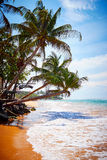 Φοίνικες στην παραλία Στοκ φωτογραφία με δικαίωμα ελεύθερης χρήσης