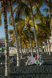 Φοίνικες στην παραλία NAO (Εθνικός Οργανισμός Διαιτησίας) Puerto, Λα Palma στοκ εικόνα