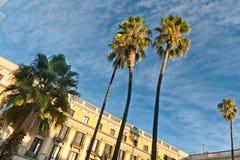 Φοίνικες στη Βαρκελώνη Στοκ εικόνα με δικαίωμα ελεύθερης χρήσης