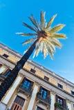Φοίνικες στη Βαρκελώνη Στοκ Εικόνα