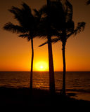 Φοίνικες στο ηλιοβασίλεμα Στοκ φωτογραφίες με δικαίωμα ελεύθερης χρήσης