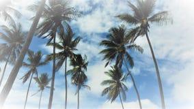 Φοίνικες στο μπλε ουρανό στοκ εικόνες με δικαίωμα ελεύθερης χρήσης