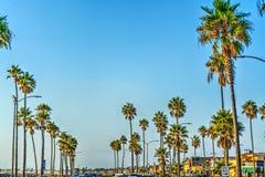 Φοίνικες στο Newport Beach Στοκ φωτογραφία με δικαίωμα ελεύθερης χρήσης
