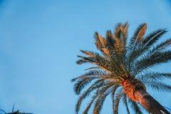 Φοίνικες - τέλειοι φοίνικες ενάντια σε έναν όμορφο μπλε ουρανό στοκ εικόνα