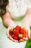 Φοίνικες των φραουλών Στοκ Εικόνες