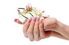 Φοίνικες Manicured στοκ εικόνα με δικαίωμα ελεύθερης χρήσης