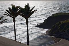 Φοίνικες Nikau που αγνοούν τον ωκεανό στοκ φωτογραφία με δικαίωμα ελεύθερης χρήσης