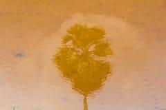 Φοίνικες Suger που απεικονίζονται στο νερό Στοκ Φωτογραφία